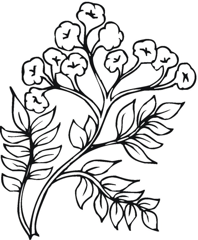 Shrubs Bushes Coloring Pages Coloring Pages Plants