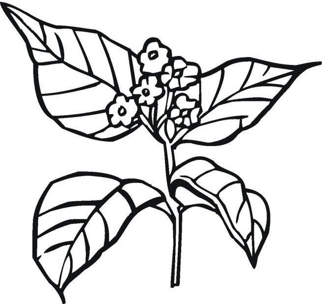 How plants grow colouring pages for Plant coloring pages